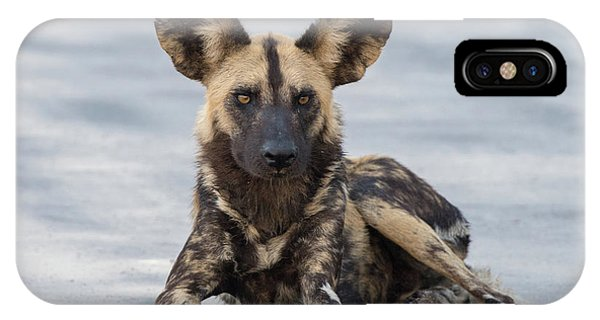 African Wild Dog Resting On A Road IPhone Case