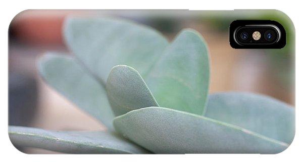 Scarlet Paintbrush iPhone Case - Airplane Plant Crassula Falcata H5 by Ilan Rosen