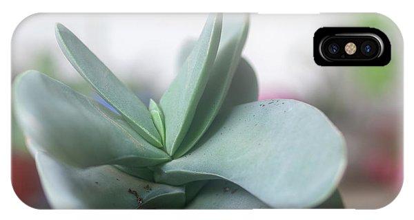 Scarlet Paintbrush iPhone Case - Airplane Plant Crassula Falcata H6 by Ilan Rosen