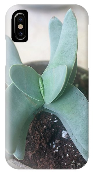 Scarlet Paintbrush iPhone Case - Airplane Plant Crassula Falcata H7 by Ilan Rosen
