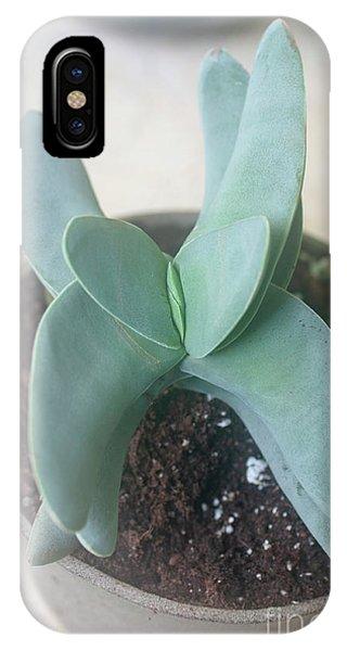 Scarlet Paintbrush iPhone Case - Airplane Plant Crassula Falcata H8 by Ilan Rosen