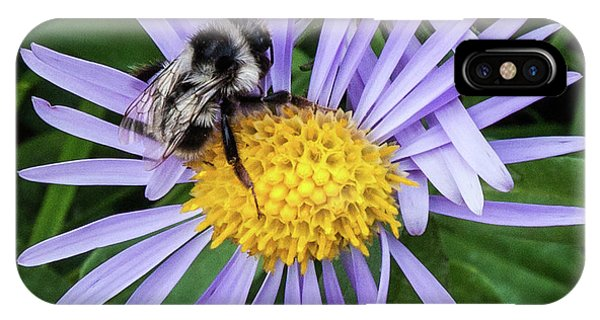 IPhone Case featuring the photograph Alpine Aster At Glacier National Park by Lon Dittrick