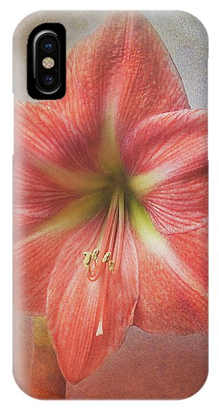 Amaryllis 'terra Cotta Star' IPhone Case