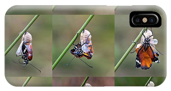 Chrysalis iPhone Case - Amazing Moment About Butterfly Change by Sezer66