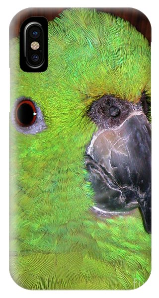 IPhone Case featuring the photograph Amazon Parrot by Debbie Stahre