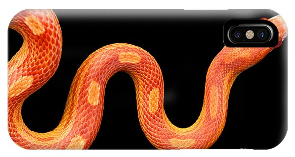 Culture iPhone Case - Amel Motley Corn Snake Isolated On by Ilight Photo