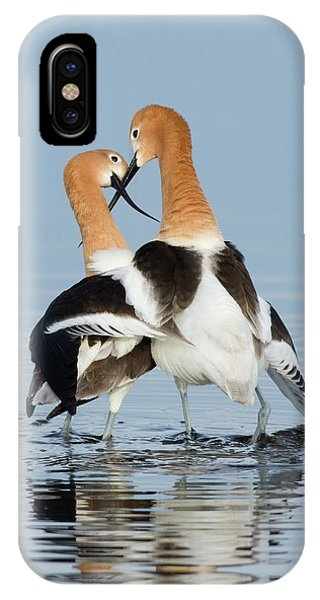 American Avocets, Courtship Dance Phone Case by Ken Archer