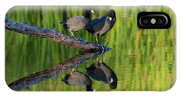 American Coot In Pond Phone Case by Larry Ditto
