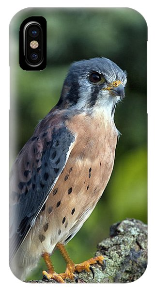 American Kestrel 9251501 IPhone Case