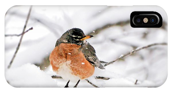American Robin In The Snow IPhone Case
