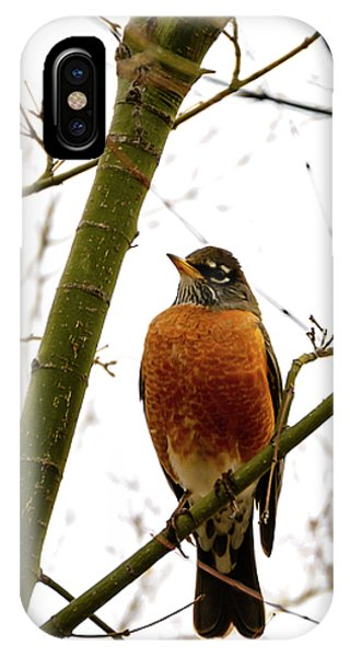 American Robin Perching In A Wintertime Tree IPhone Case