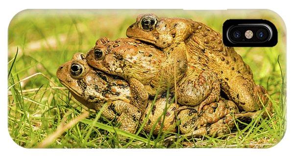 American Toad Western Brooke Pond, Grose M IPhone Case