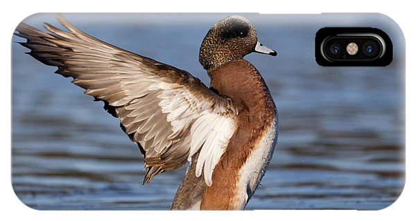 American Wigeon Delight IPhone Case