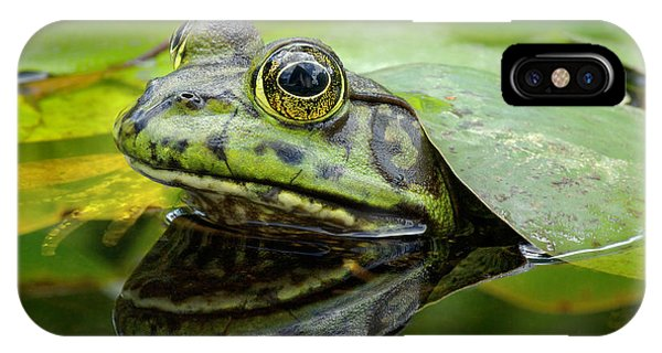 Aquatic Plants iPhone Case - An American Bullfrog. Photo Taken In by Angel Dibilio