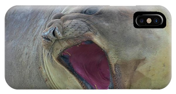 An Elephant's Roar IPhone Case