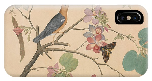 Moth iPhone Case - An Orange Headed Ground Thrush And A Moth On A Purple Ebony Orchid Branch, 1778 by Shaikh Zain ud-Din