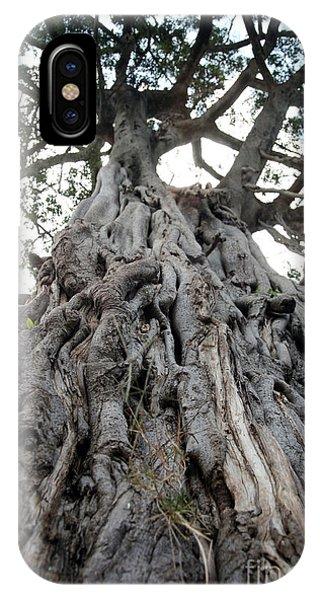 Farmland iPhone Case - Ancient Olive Tree In The Masai Mara by Paul Banton