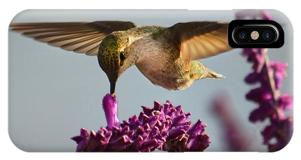 Anna's Hummingbird Sipping Nectar From Salvia Flower IPhone Case