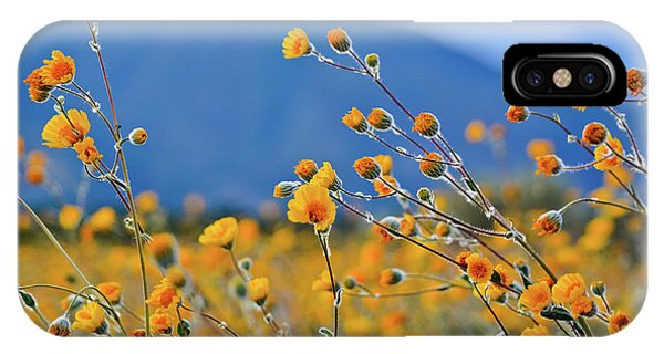 Anza Borrego Wild Desert Sunflowers IPhone Case