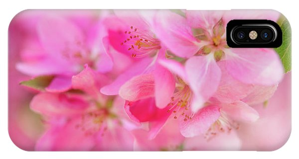 IPhone Case featuring the photograph Apple Blossom 5 by Leland D Howard