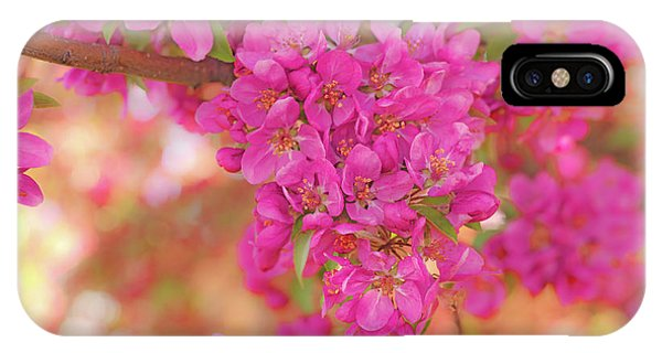 IPhone Case featuring the photograph Apple Blossoms A by Leland D Howard