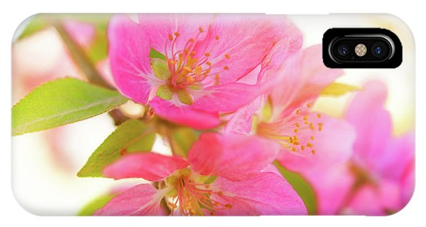 IPhone Case featuring the photograph Apple Blossoms Warm Glow by Leland D Howard