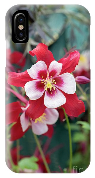 Aquilegia iPhone Case - Aquilegia Swan Red And White Flower by Tim Gainey