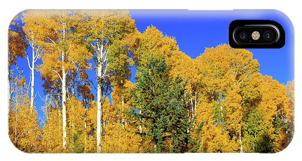 Arizona Aspens And Blowing Leaves IPhone Case