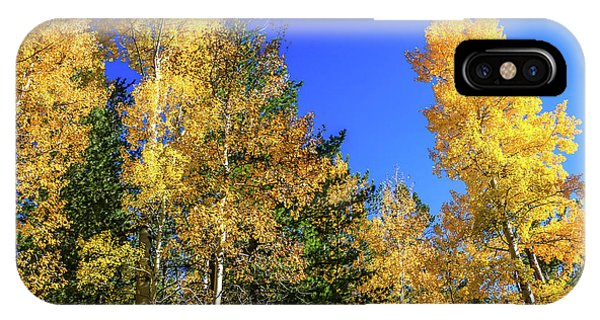 Arizona Aspens In Fall 1 IPhone Case