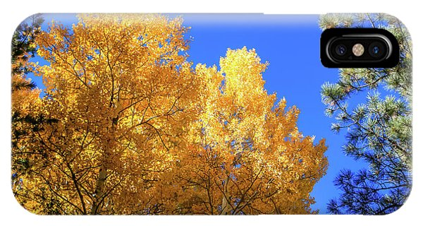 Arizona Aspens In Fall 2 IPhone Case