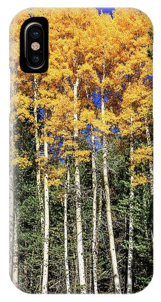 Arizona Aspens In Fall 3 IPhone Case