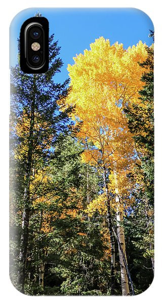 Arizona Aspens In Fall 5 IPhone Case
