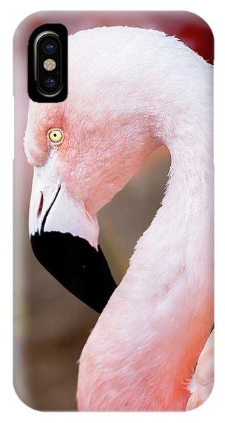IPhone Case featuring the photograph The Flamingo, Animal Decor, Nursery Decor, Flamingo Gifts, Flamingo Phone Case,  by David Millenheft