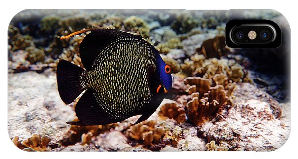 IPhone Case featuring the photograph Aruban French Angelfish by Lars Lentz