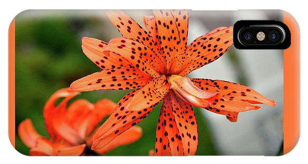 Asian Tiger Lily IPhone Case