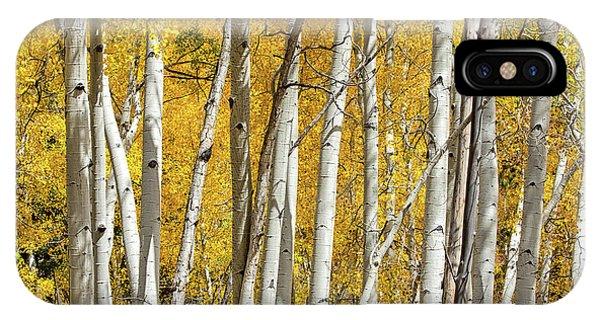 Aspen Autumn IPhone Case