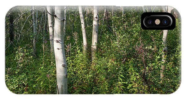 IPhone Case featuring the photograph Aspen Solitude by Lon Dittrick