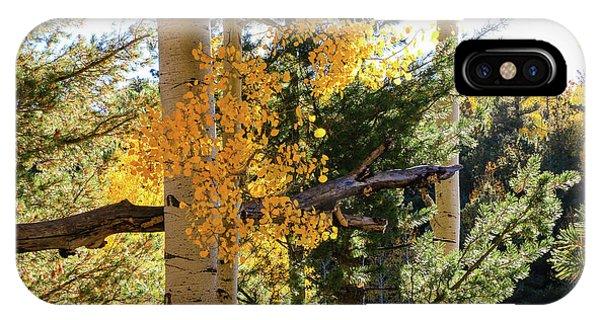 Aspen Tree Close IPhone Case