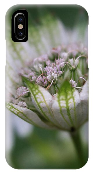 Astrantia IPhone Case