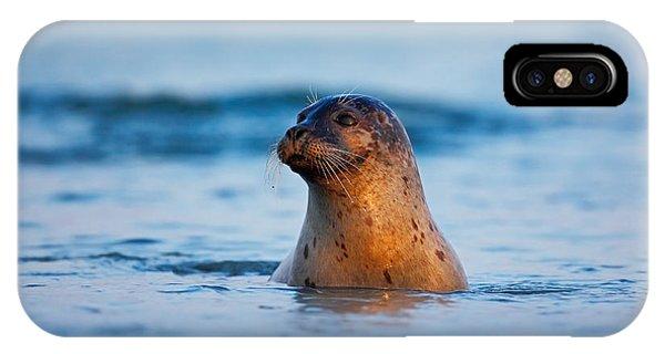 French iPhone X Case - Atlantic Grey Seal, Halichoerus Grypus by Ondrej Prosicky