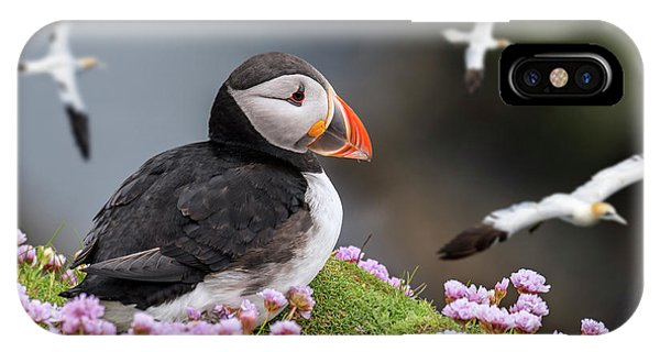 Atlantic Puffin And Soaring Gannets IPhone Case