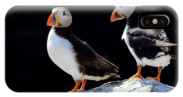 English Countryside iPhone Case - Atlantic Puffins, Farne Islands Nature by Attila Jandi