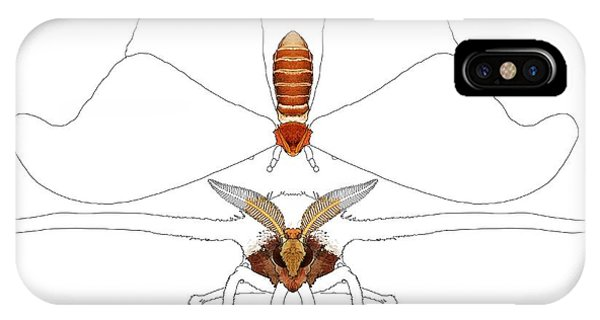 iPhone Case - Atlas Moth1 by Joan Stratton