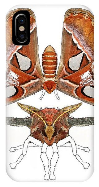 iPhone Case - Atlas Moth4 by Joan Stratton