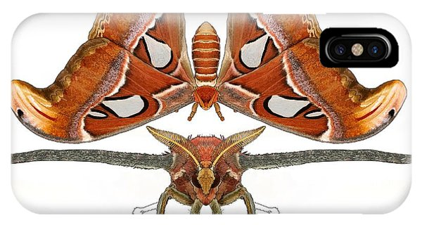 iPhone Case - Atlas Moth5 by Joan Stratton