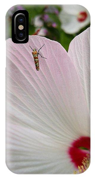 Atteva Aurea 1 IPhone Case