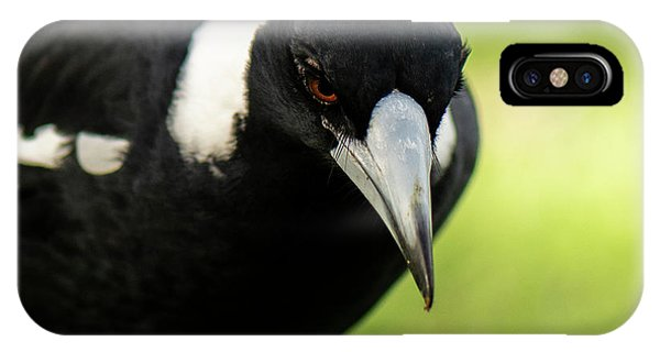 Australian Magpie Outdoors IPhone Case