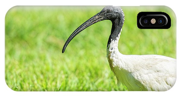IPhone Case featuring the photograph Australian White Ibis by Rob D Imagery