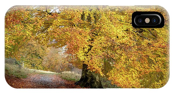 Autumn Beech Walk Phone Case by Tim Gainey