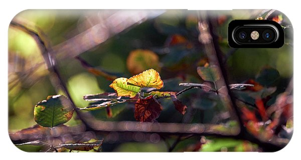 IPhone Case featuring the photograph Autumn Beginnings by Whitney Goodey